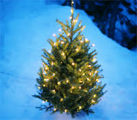 Christmas market and christmas tree lightning in Atrå.