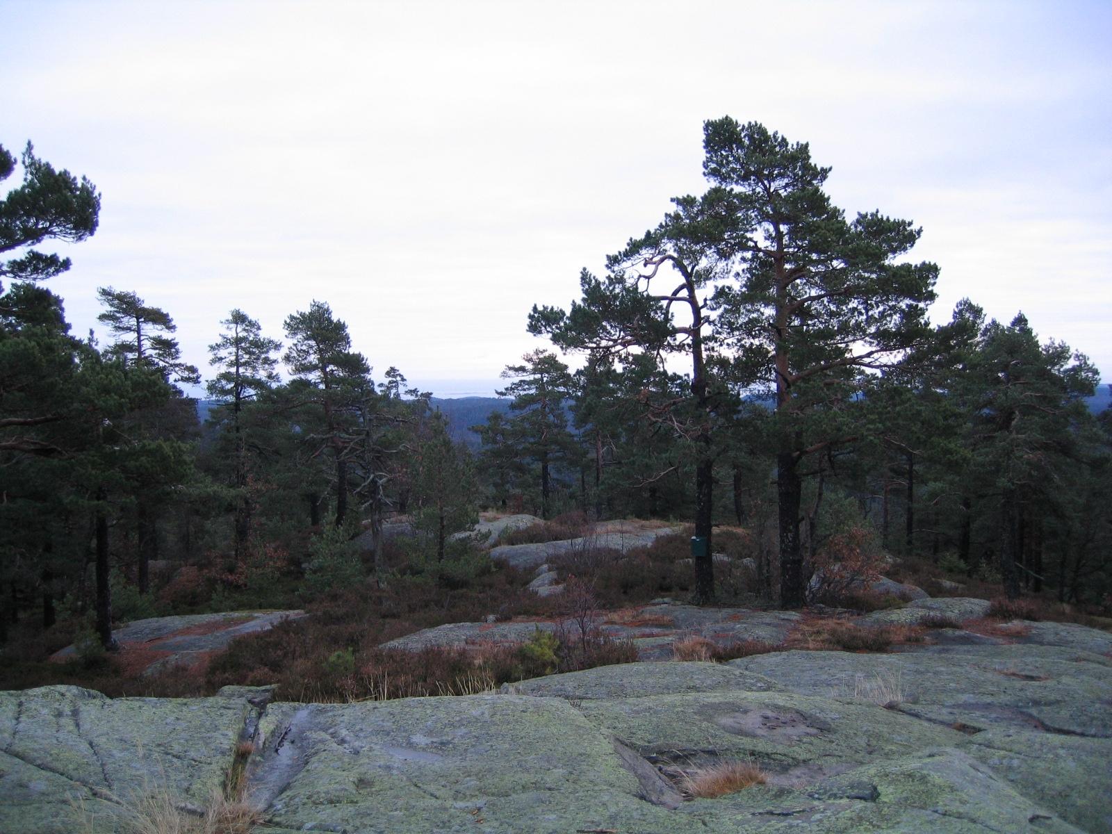 Hørsfjell, © Mette Lilleberg