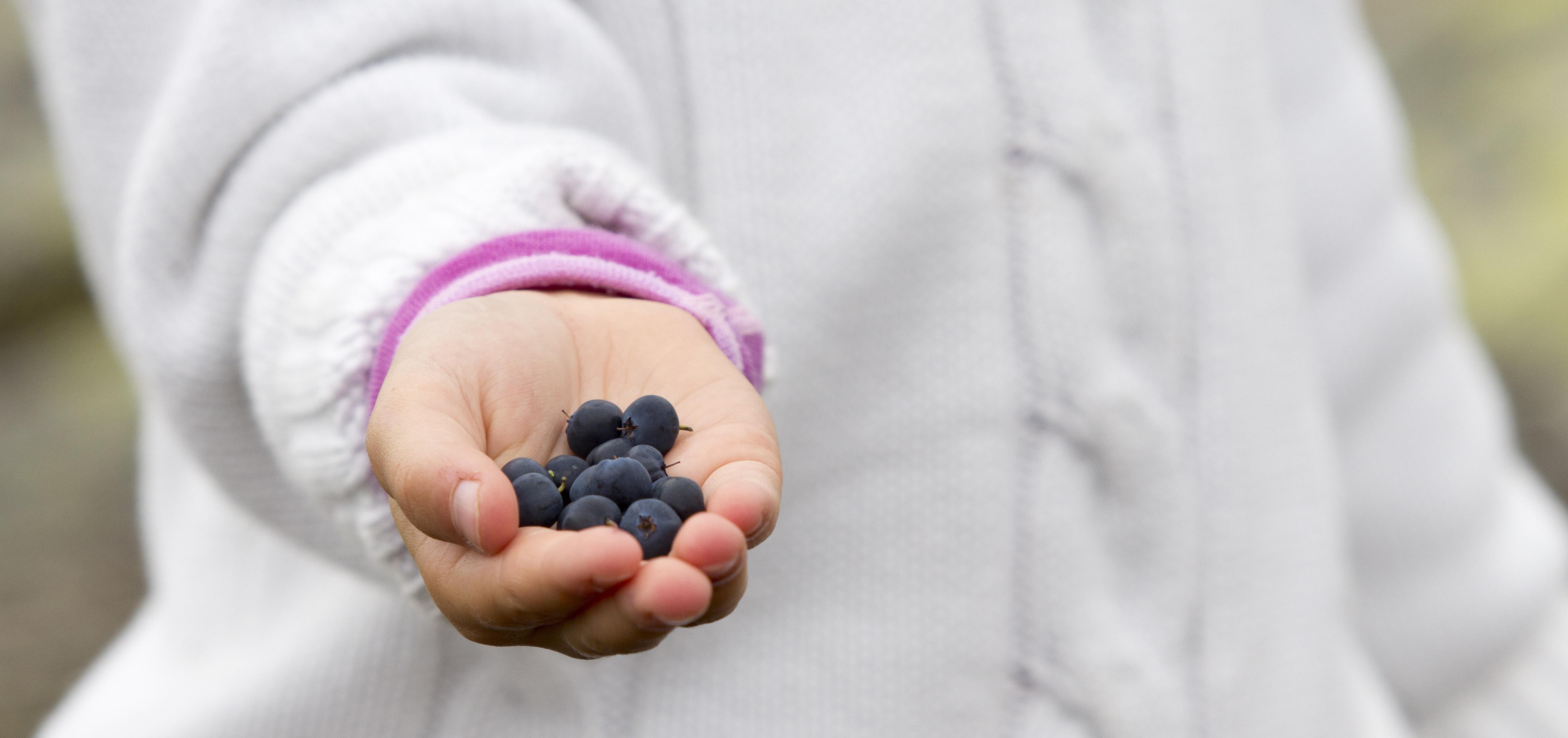 Høsten er en flott tid på Hardangervidda. Ta gjerne med barna på bær tur.  , © Guro Lien