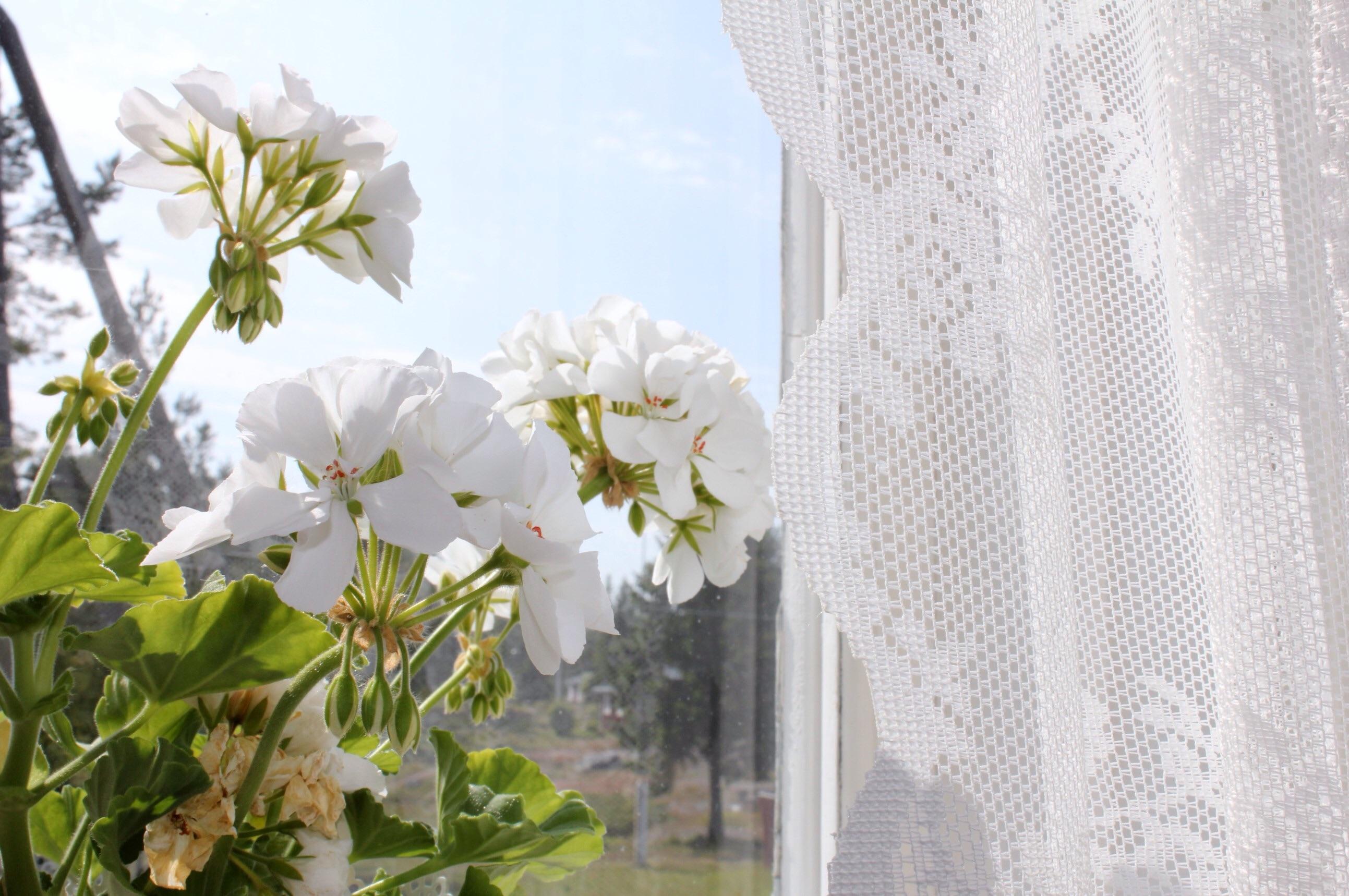 Fönster i sommakafe
