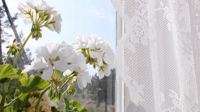 Fönster i sommarkafe