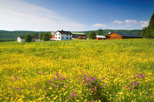 Lokalmatsafari - Bonden, Bryggeren og Reinsdyret