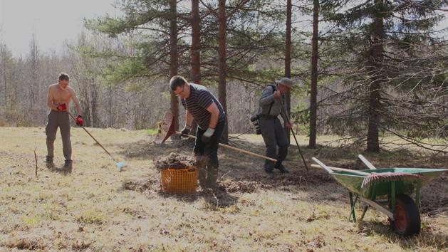 Cleaning of hay meadow