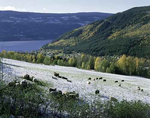 Familiecamping ved Tinnsjøen, ca 30 km fra Rjukan. 8 hytter med plass til 2-4 pers. Alle hyttene har kjøkkenutstyr. Telt/caravanplasser. El. kontakt for bobil/caravan. , © visitRjukan AS