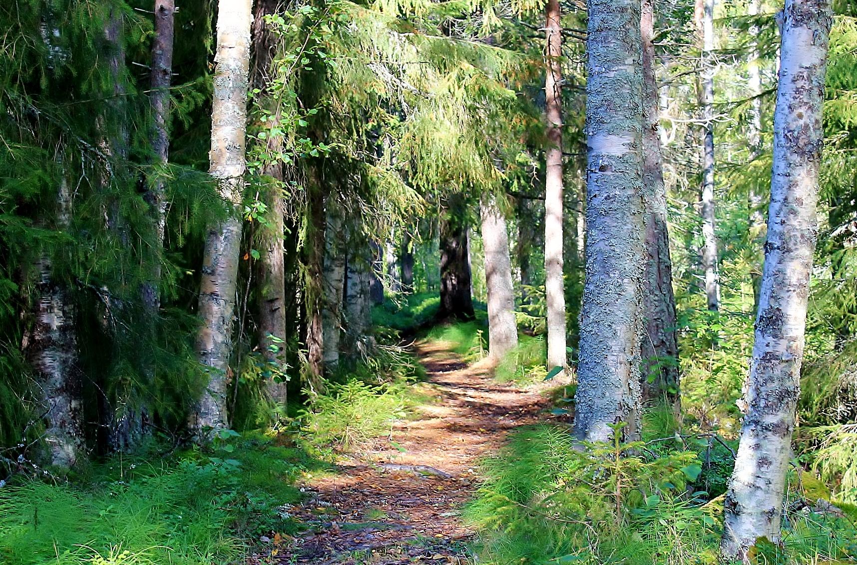 Karlberg vandringsled, SE