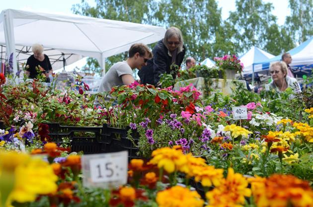 Blommor på Öjeby kyrkmarknad