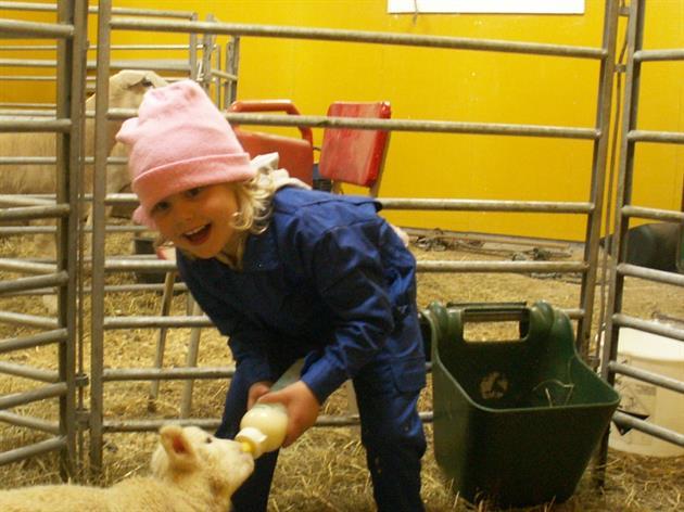 Flicka med får Di-Ni farmen