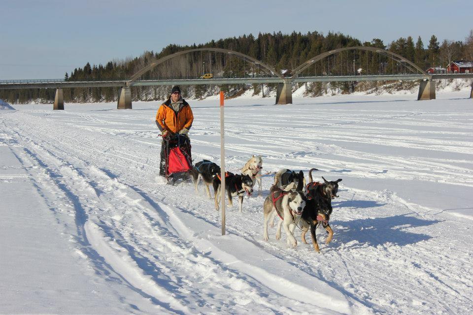 Halvdagstur med hundeslede - Trondheim Husky