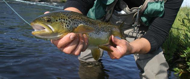 A lucky catch., Örjan Lundholm