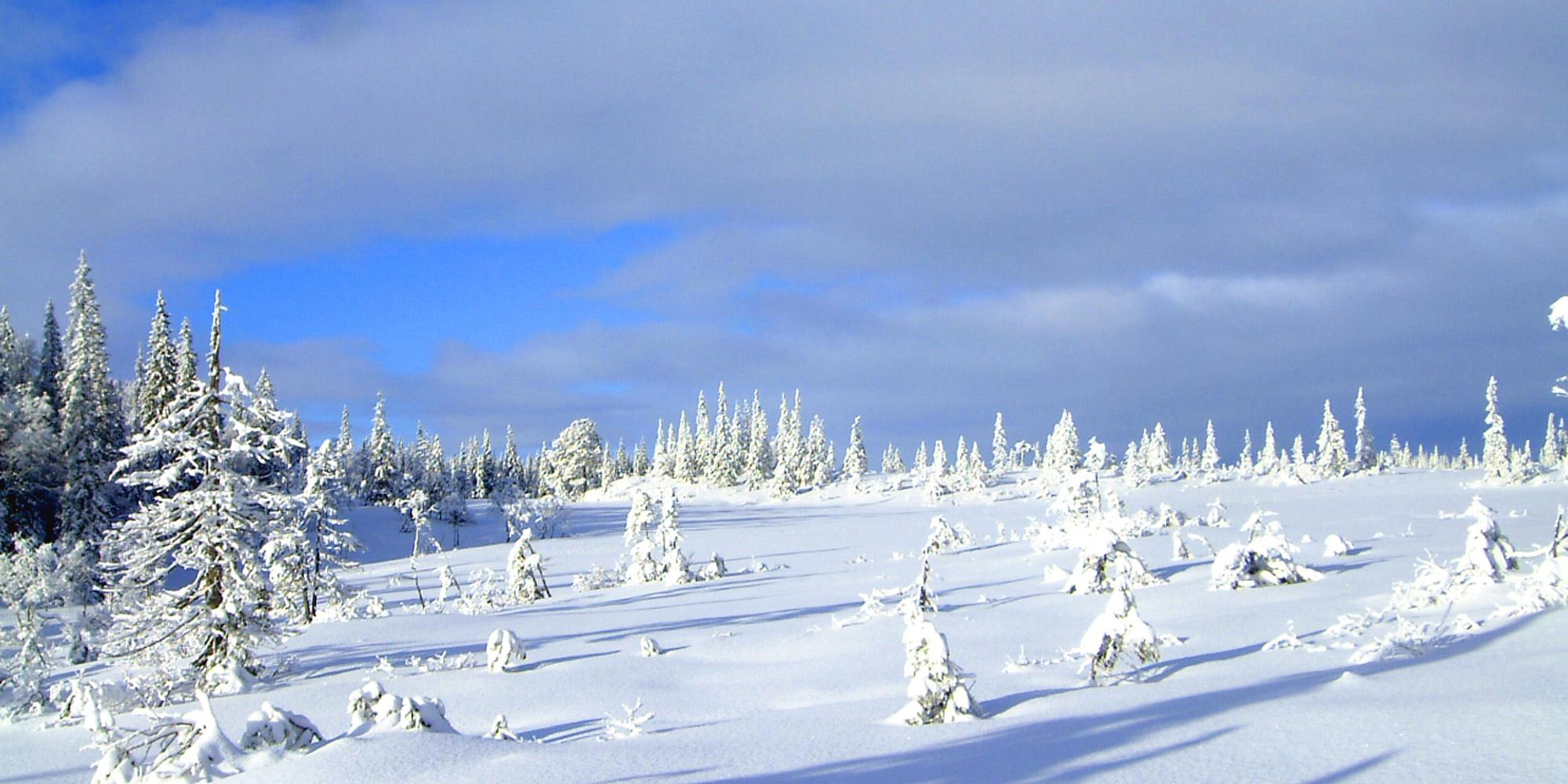 Idyllic Mount Skjækra in winter. Copyright: Steinkjer Kommuneskoger - Ogndalsbruket