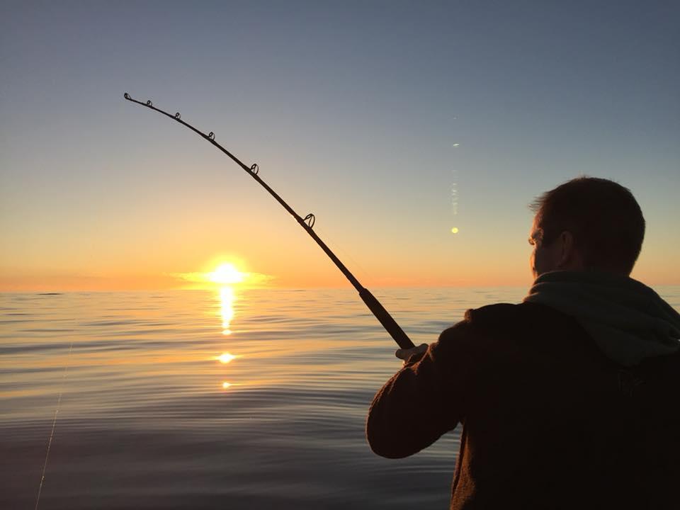 Sjøsterk - fisketurer, båtutleie og fuglesafari
