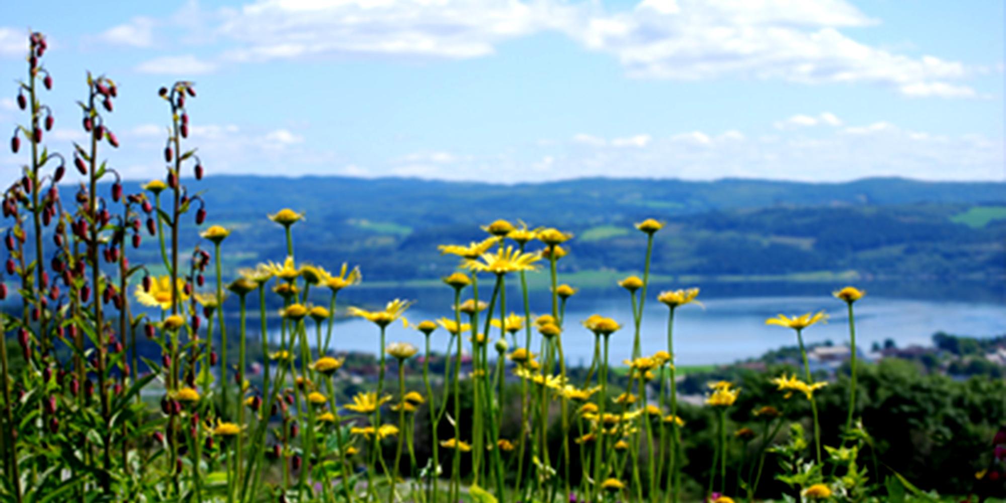 Husfrua Countyr Farm Hotel - flora with a view. Copyright: Husfrua Gårdshotell