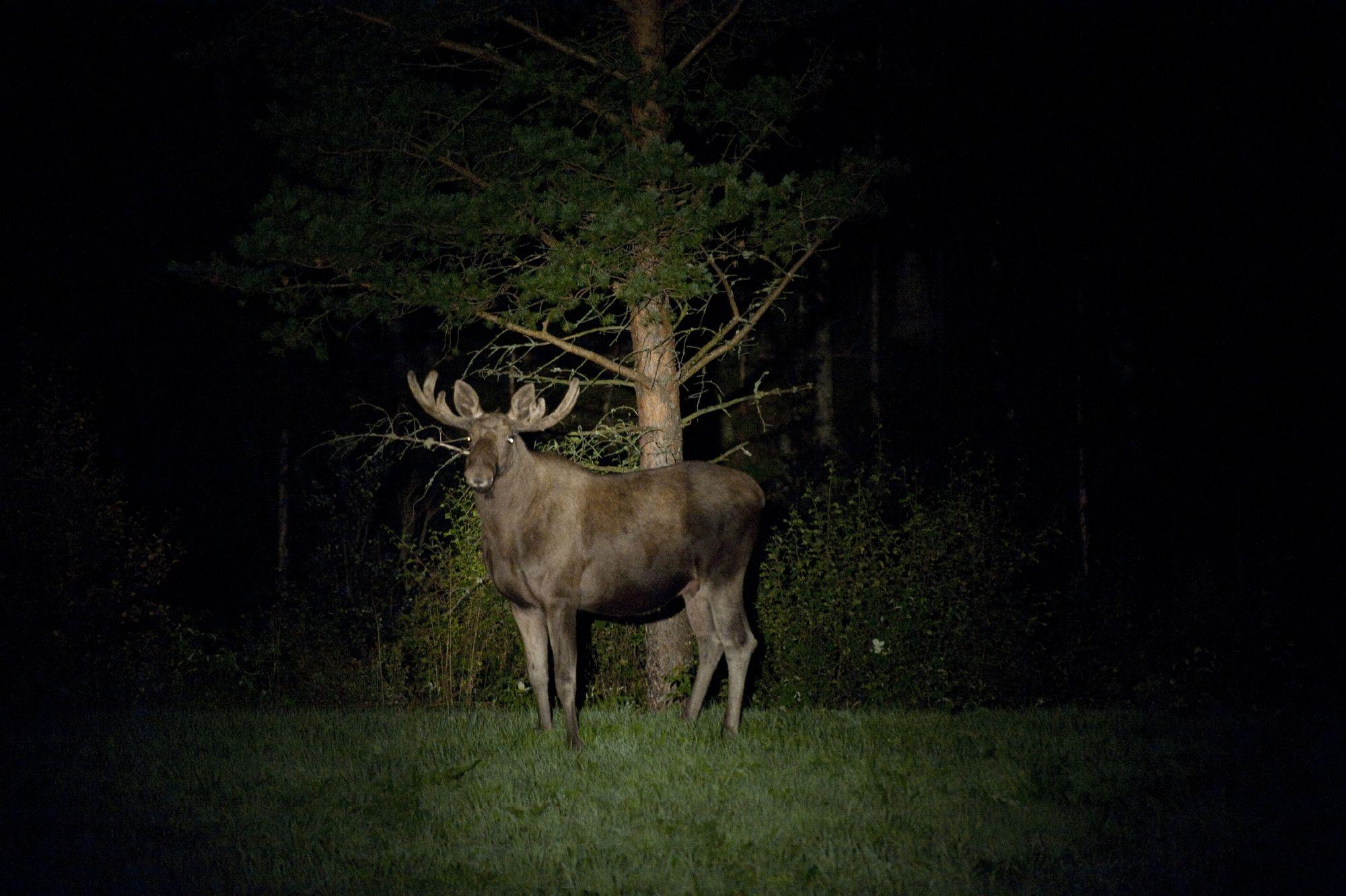 Copyright © Anders Martinsen Fotografer