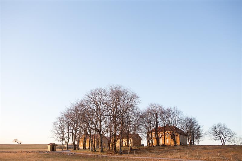 Buøy gård