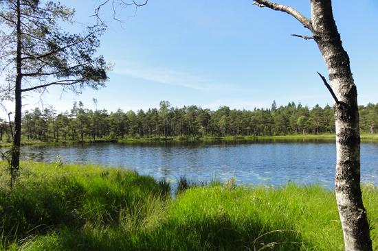 Ulvanstorp ligger i en fantastisk natur med goda möjligheter till skogspromenader, bland annat längs den tidigare dansk-svenska gränsen.
