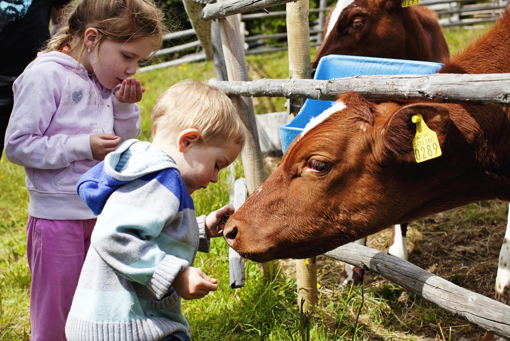 Barna får et nært møte med dyrene på våre setre.  , © Fotograf Jacobsen