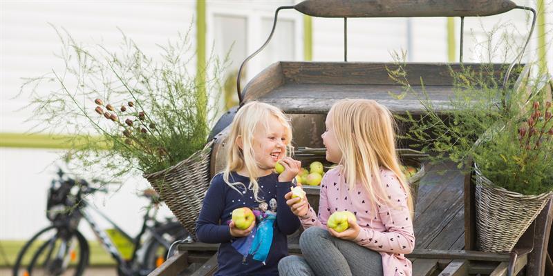 Strømnes - along the Golden Road in Inderøy. Harvesting of apples. Copyright: Lena Johansen