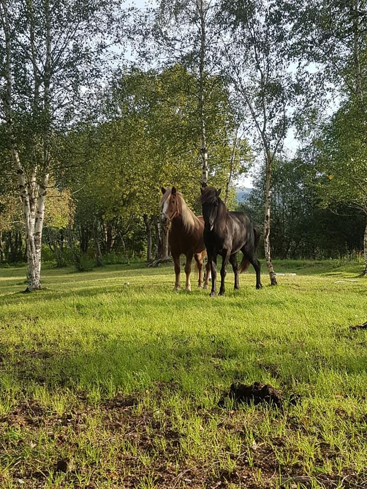 Hesteridning ved Jørum Gård