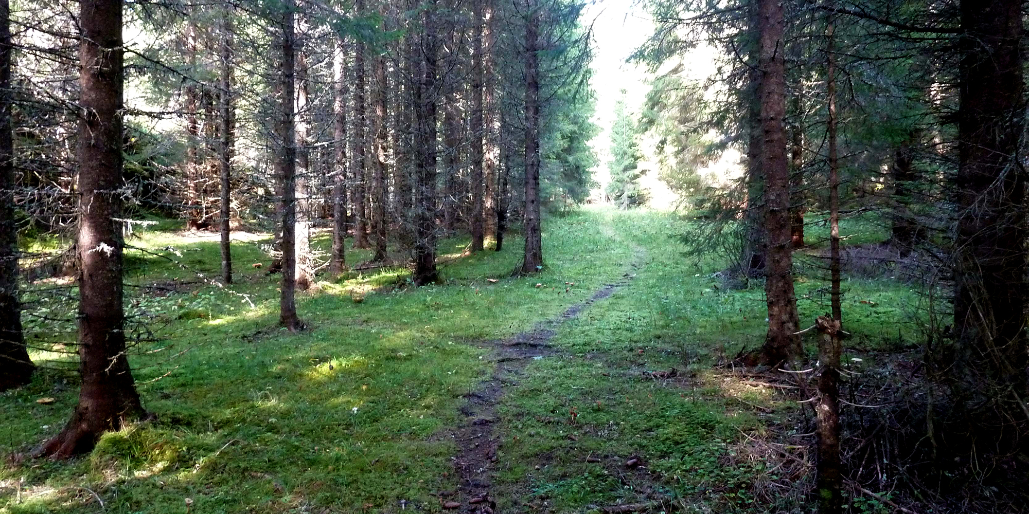 Fargetuva - sti i skogen. Copyright: Fargetuva