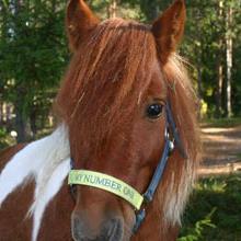 En av Ridskolans ponnyer - Santoz, PRK