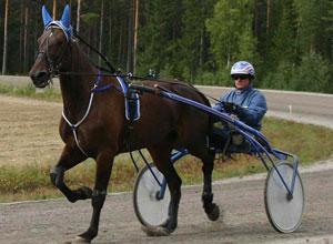 Trav travhäst 1