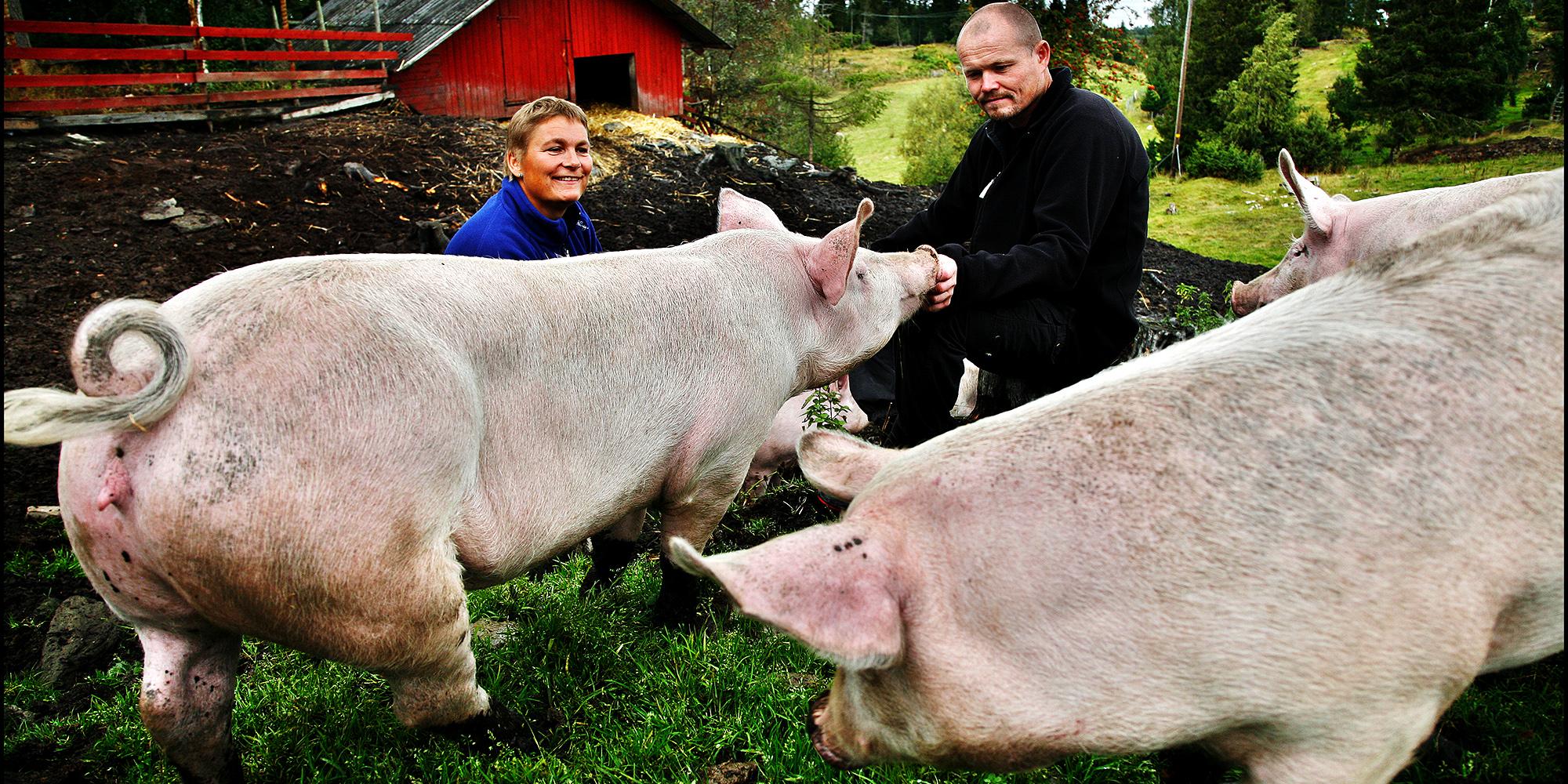 Berg Gård and Inderøy Gårdsbrenneri - the hosts with 2 of the free range pigs. Copyright: Berg Gård/Magnar Kirknes