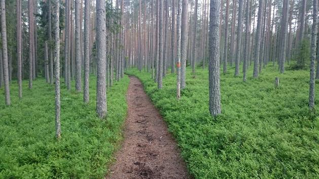 Skogsstig strax norr om Högberget, Adrian Rubin