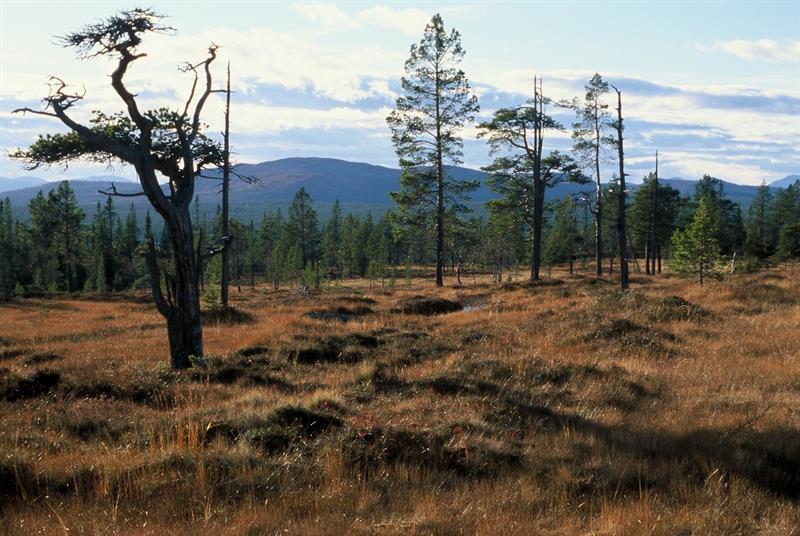 Femundsmarka Nationalparkzentrum abteilung Røros
