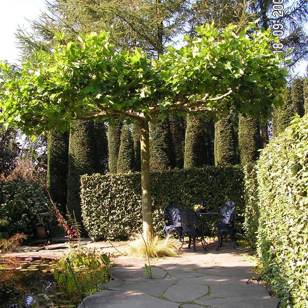 Träd kan även formklippas