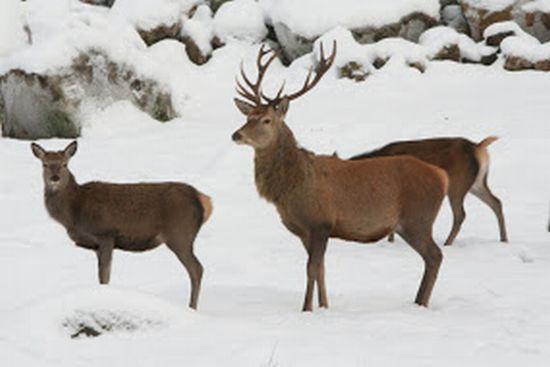 Konferera och mötes på Hjortseryd - närheten till vildmarken och djuren som omger mötet inspirerar för dagen och ger minnen för livet.