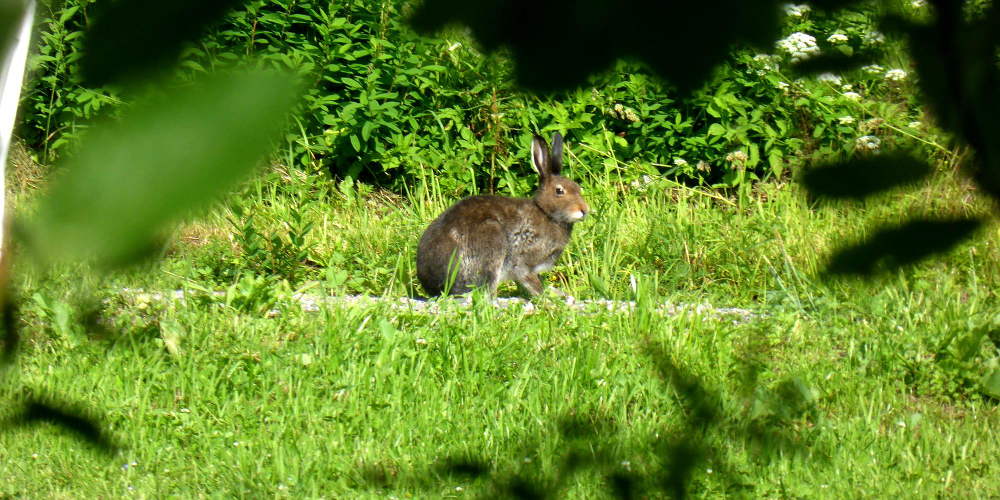 Fargetuva - kanin i hagen. Copyright: Fargetuva