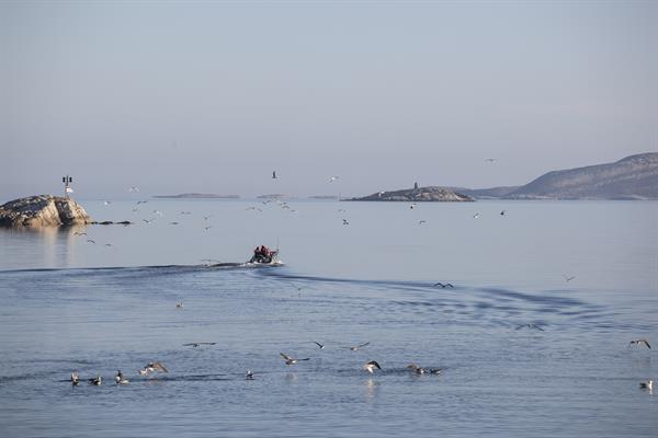 Bessaker Liv Og Rore Visit Coastal Norway