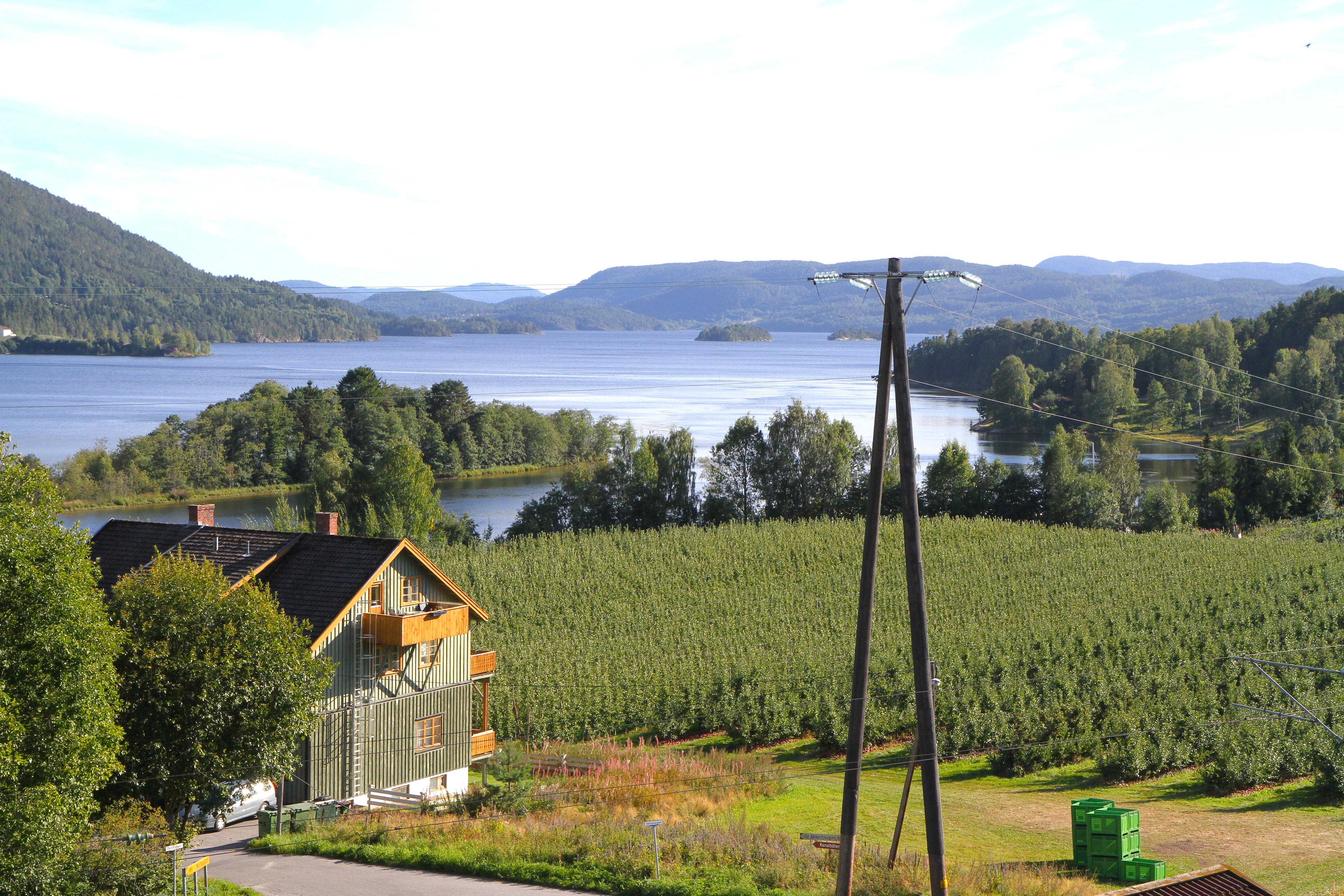 Utsikt over frukthagen og Norsjø