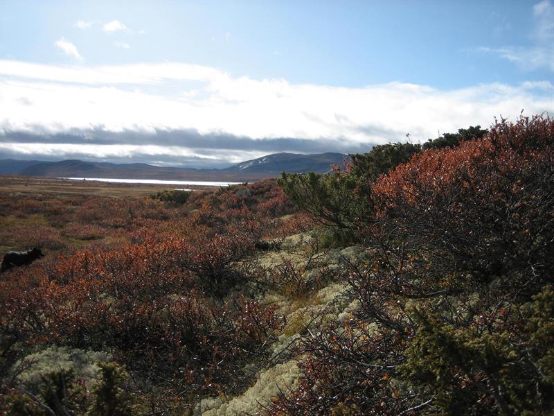 Mårfjorden