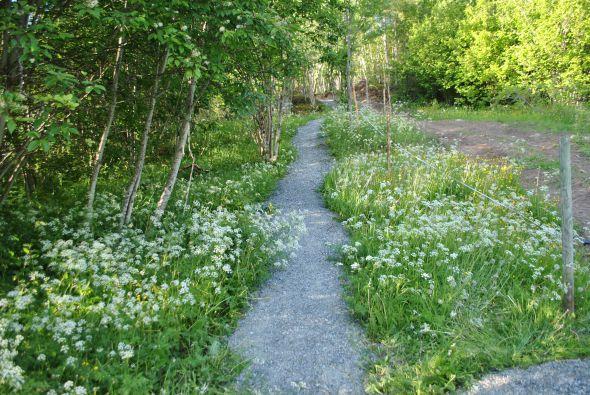 Letnes farm, culture trail
