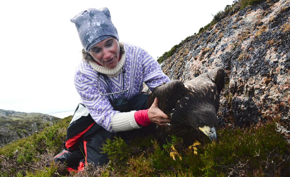 Mausundgløtt. Copyright: Lena Jørgensen