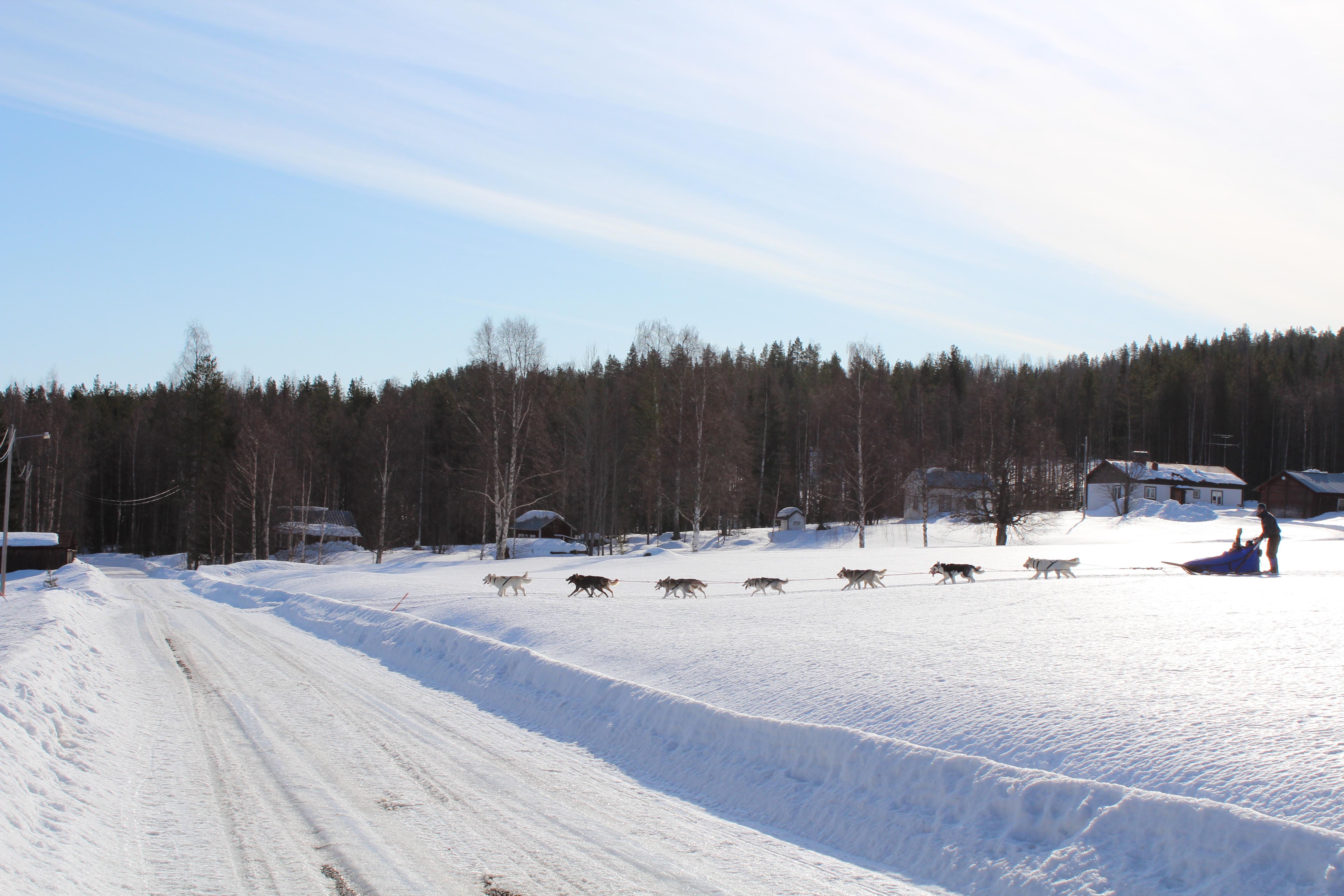 © Arctic Arssarnerit