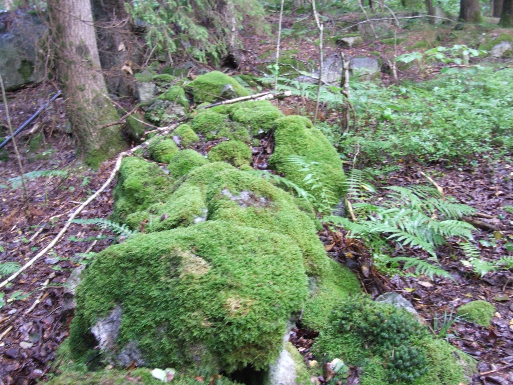 Litt fra stien over Siktesøya