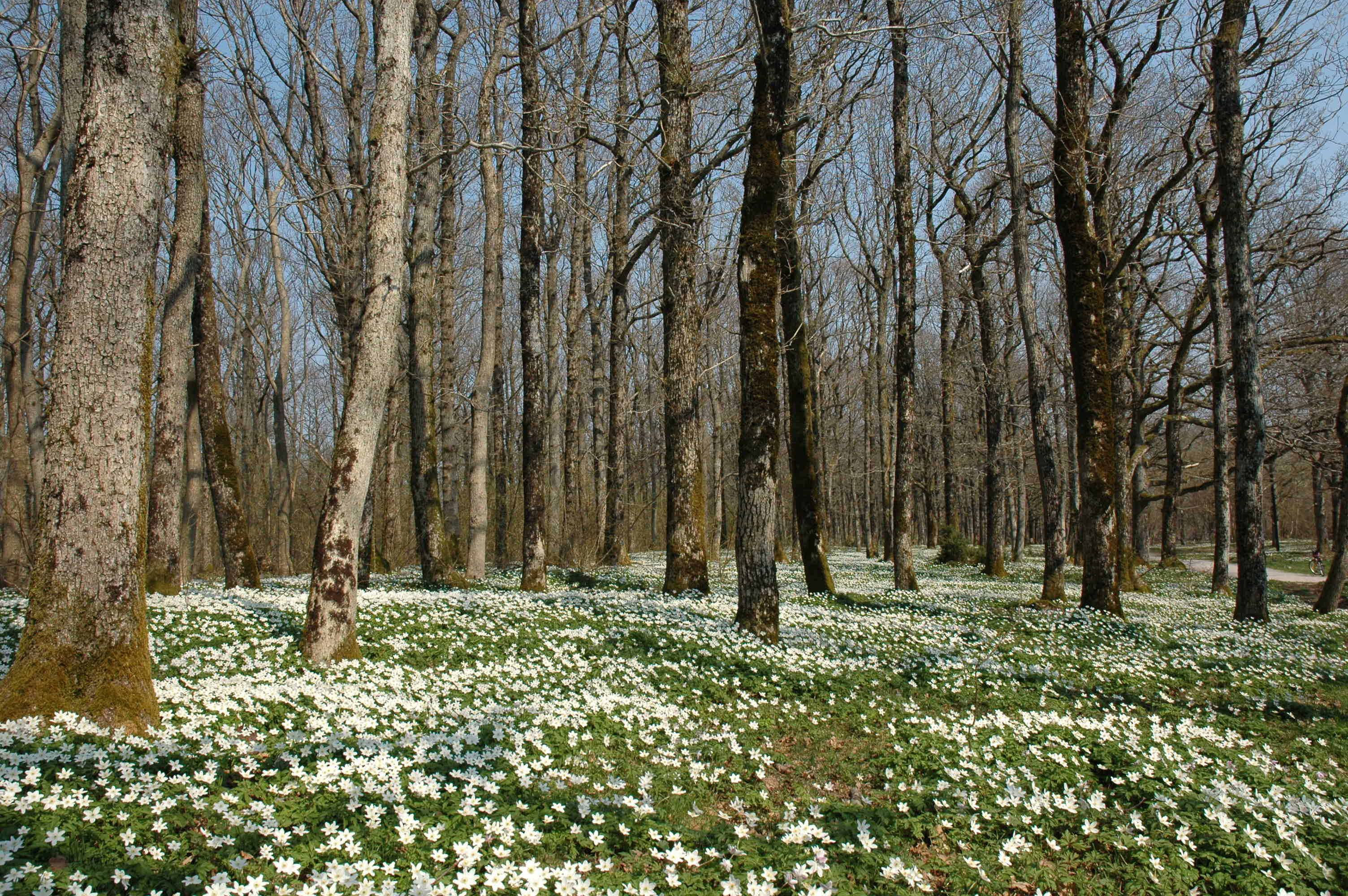 Hvitveis, © Gea Norvegica Geopark