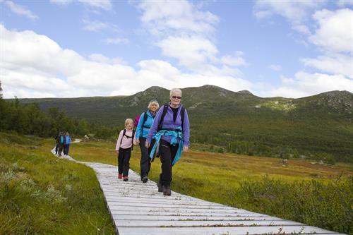 Kort og lett rundløype på Mogen. Fjellvåken tar deg fra Skinnarbu og inn til det vegløse samfunnet på Mogen.  , © Svein Olav Vaa