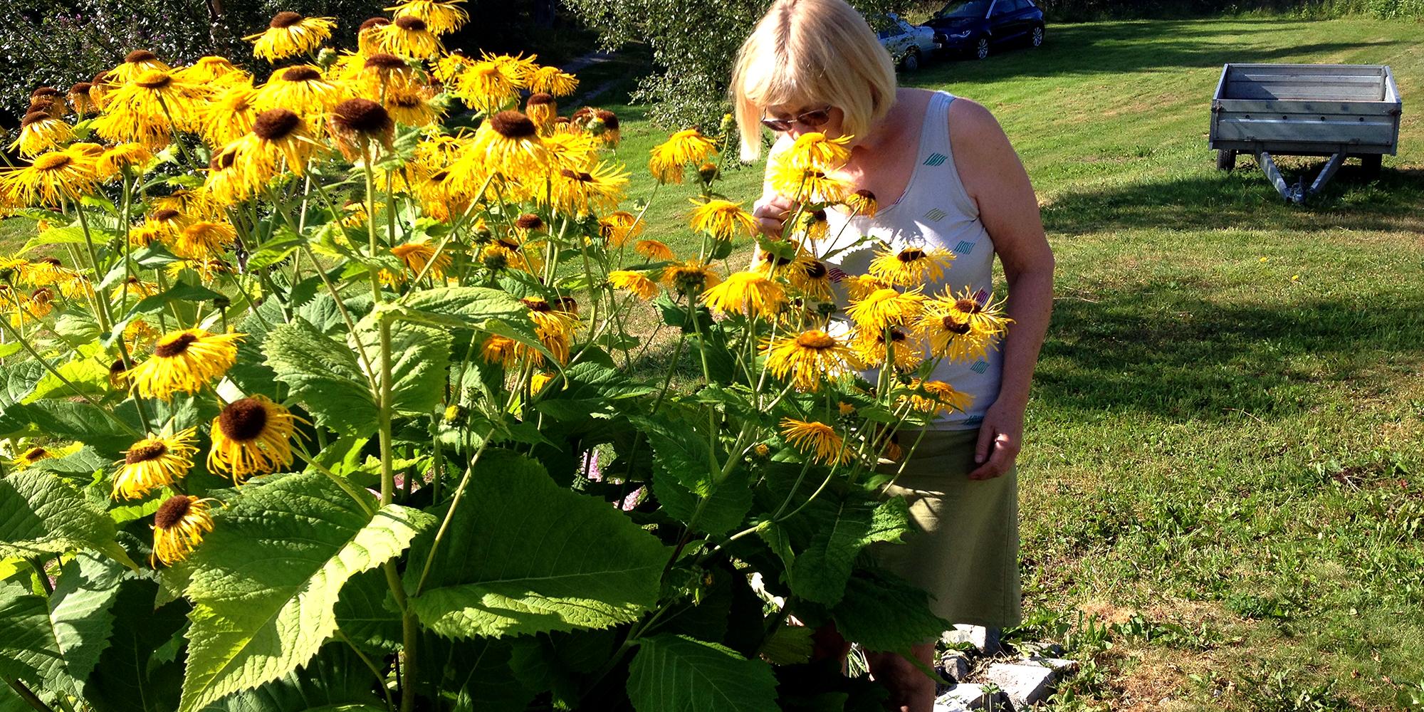 Fargetuva - vertinnen blant blomster. Copyright: Fargetuva