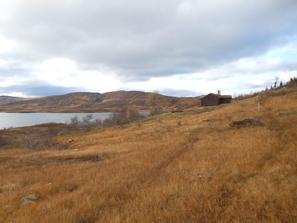 Lågvassbua, Steinkjer Kommuneskoger, Innherred, Lågvatnet, Lågvassbu, fiske, vandring, .