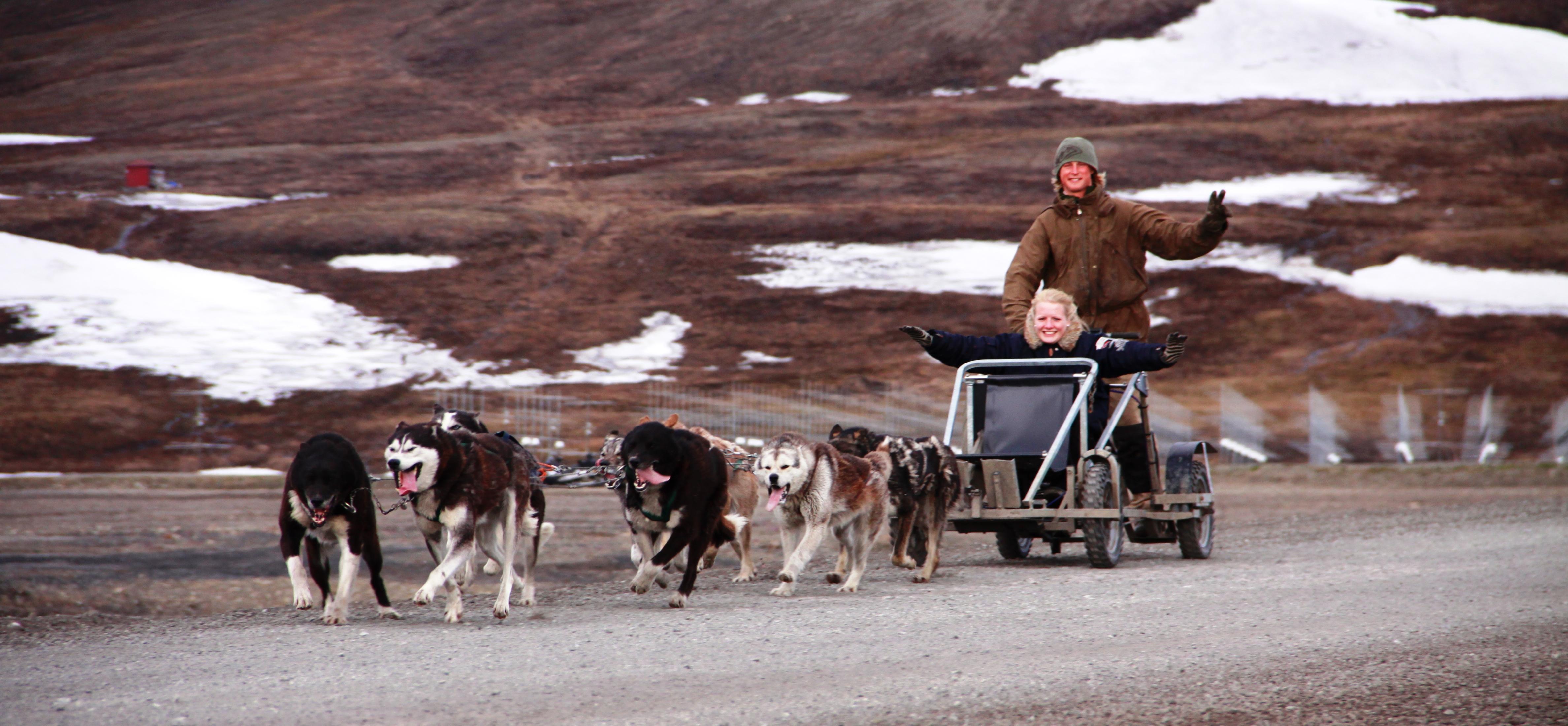 Green Dog tur på hjul