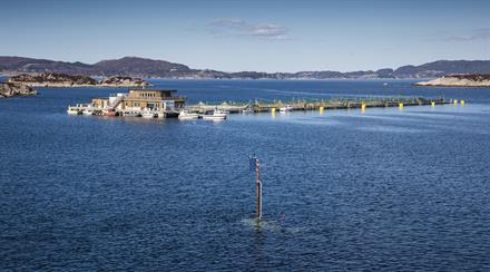 Visningstur hos Engesund Fiskeoppdrett i haustferien!