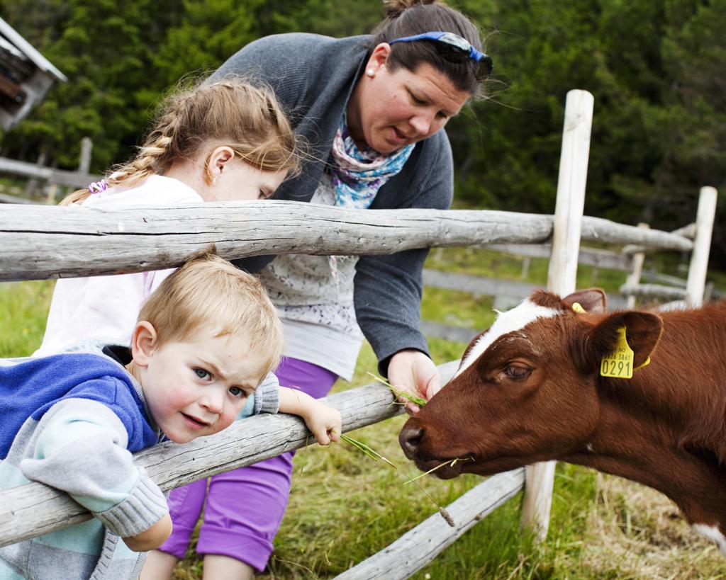 På Håvardsrud Seterliv får du se bugdelivet i sin helhet. Her er det produksjon av norsk tradisjonsmat, samt masse dyr som er morsomt for barna.  , © Fotograf Jacobsen