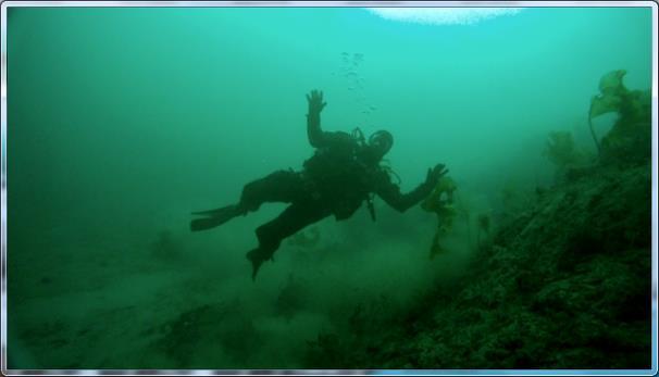 Diving in Åfjord