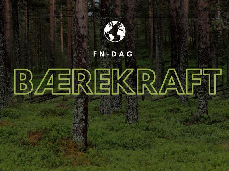 Skog med mosedekke på skogbunnen.