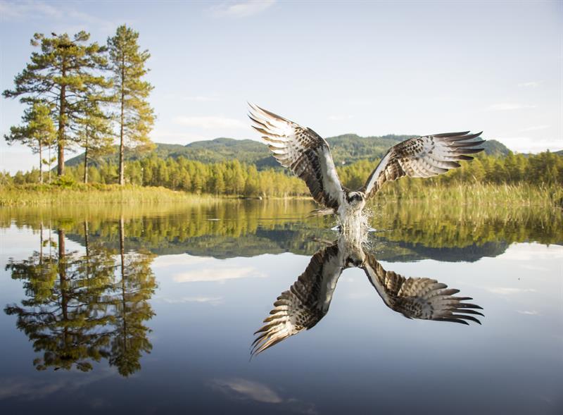 "Opning av Dalen Bryggjeutstilling med ""Fotobonden"" - Vest-Telemark.no"