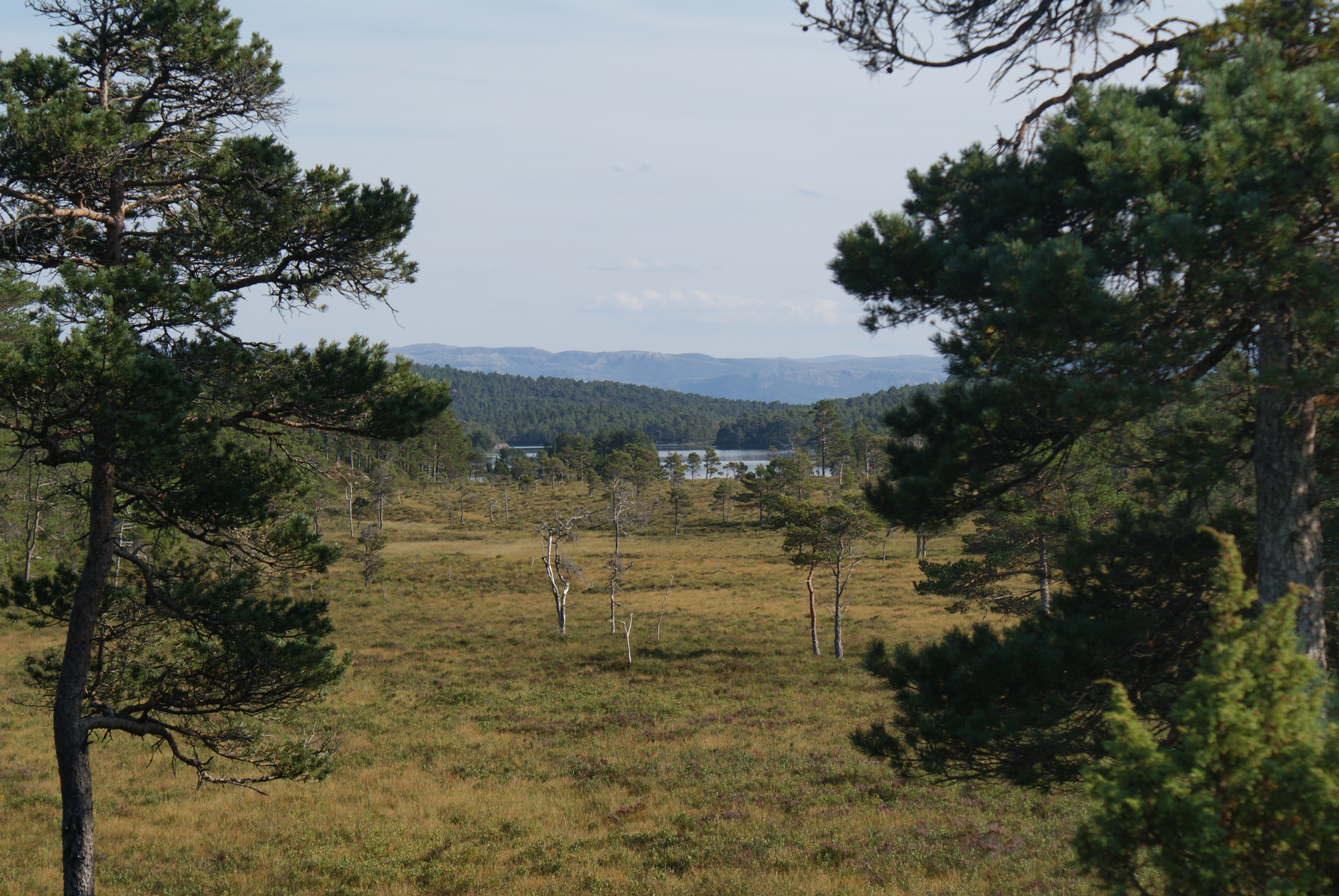 Gammelveien over Hitra. Copyright: Kystmuseet i Sør-Trøndelag