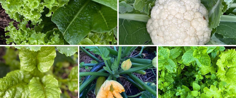Egen odlade grönsaker